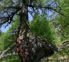 Val di rabbi parco nazionale dello stelvio trentino for Le pigne dei larici