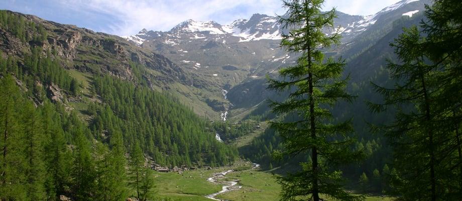 La scalinata dei larici monumentali parco nazionale for Le pigne dei larici