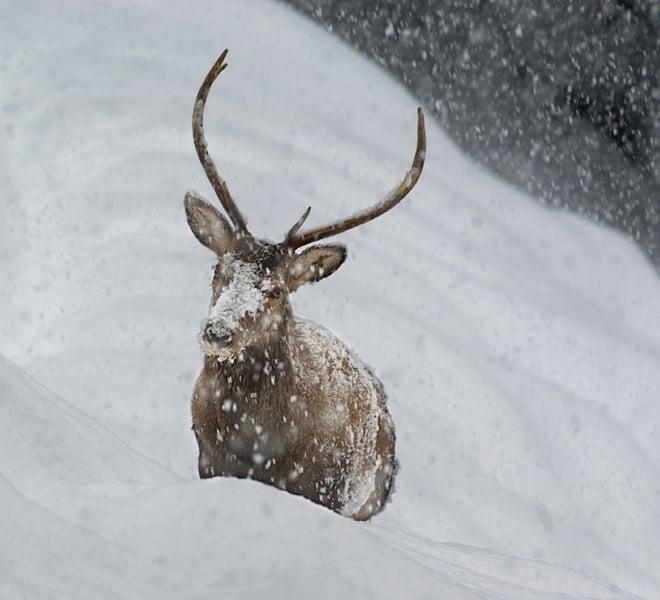 Rispetta gli animali in inverno parco nazionale dello - Animali in inverno clipart ...
